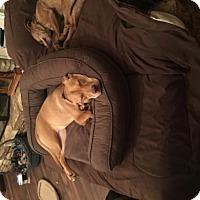 Adopt A Pet :: Carmela(CPR) - Von Ormy, TX