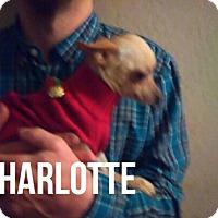 Adopt A Pet :: CHARLOTTE - Glendale, AZ