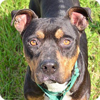 Brooksville Dog Rescue