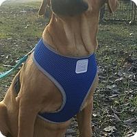 Adopt A Pet :: FLYNN - East Windsor, CT