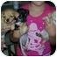 Photo 1 - Chihuahua/Dachshund Mix Puppy for adoption in Mesa, Arizona - chi 1