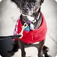Adopt A Pet :: Pepe - Santa Monica, CA