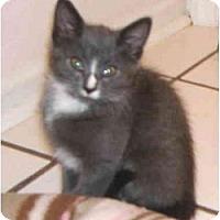 Adopt A Pet :: Fynn - Colmar, PA