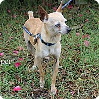 Adopt A Pet :: Skipper - Crowley, LA