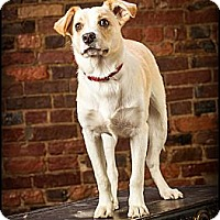 Adopt A Pet :: Willy - Owensboro, KY