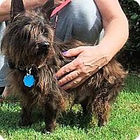 Adopt A Pet :: Yogi - Mooy, AL