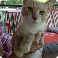 Adopt A Pet :: Tanner - Monroe, GA