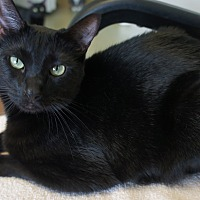 Adopt A Pet :: Nellie - Duluth, GA