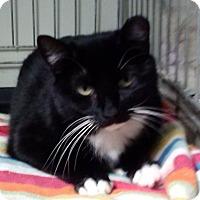 Adopt A Pet :: Princess Leia - Windsor, CT