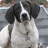 Adopt A Pet :: Tilly - Oakland, AR