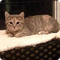 Adopt A Pet :: Greta - East Brunswick, NJ