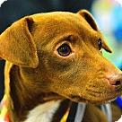 Adopt A Pet :: Browney