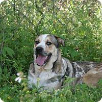 Adopt A Pet :: Levi - Lufkin, TX