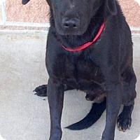 Adopt A Pet :: 377255 Ron - San Antonio, TX