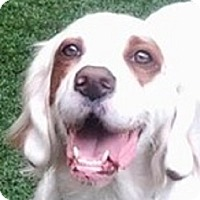Adopt A Pet :: KOLBY - Pine Grove, PA