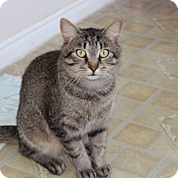 Adopt A Pet :: Jimmy - Elliot Lake, ON
