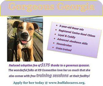 Boxer Mix Dog for adoption in Tonawanda, New York - Georgia