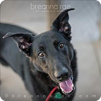 Adopt A Pet :: Bacon - Sheboygan, WI