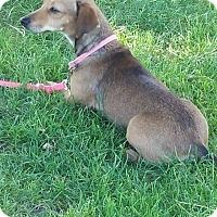 Adopt A Pet :: MOLLIE - Gustine, CA