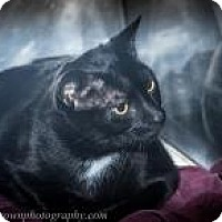 Adopt A Pet :: Salem - Wellesley, MA