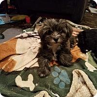 Adopt A Pet :: Chirpa: Adoption Pending - Verona, NJ