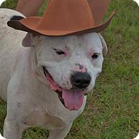 Adopt A Pet :: Fito - Hazlehurst, GA