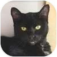 Adopt A Pet :: Mis - Vancouver, BC