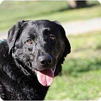 Adopt A Pet :: Kramer - Lewisville, IN