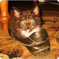 Adopt A Pet :: Tiana - Modesto, CA