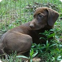 Adopt A Pet :: Friday - Brattleboro, VT