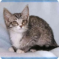 Adopt A Pet :: Henry - Howell, MI