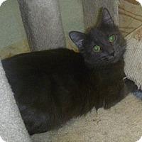 Adopt A Pet :: Abigail - Hamburg, NY