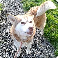 Adopt A Pet :: Rana - Augusta County, VA
