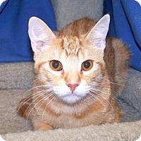 Adopt A Pet :: Baja - Colorado Springs, CO