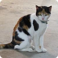 Adopt A Pet :: Bella - Horsham, PA