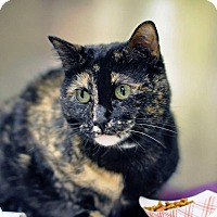 Adopt A Pet :: Cally - Chicago, IL