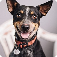 Adopt A Pet :: Lil Momma - Portland, OR