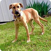 Adopt A Pet :: Bliss-pending adoption - East Hartford, CT