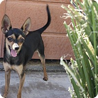 Adopt A Pet :: Ossia - Henderson, NV