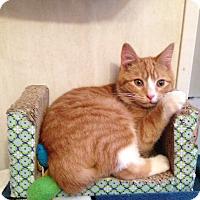 Adopt A Pet :: Huckleberry - Stafford, VA