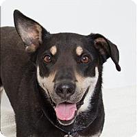 Adopt A Pet :: Sugar - San Luis Obispo, CA
