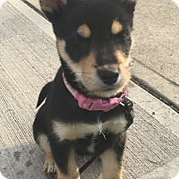 Adopt A Pet :: Julip - North Olmsted, OH