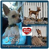 Adopt A Pet :: Joey - Leduc, AB