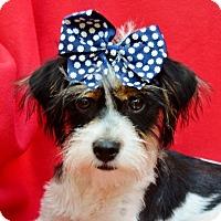 Adopt A Pet :: Gigi - Irvine, CA