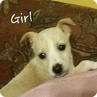 Adopt A Pet :: Snow Angel - Hanover, PA