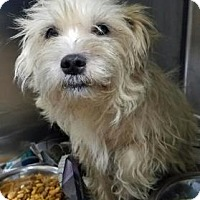 Adopt A Pet :: Dixie - Miami, FL