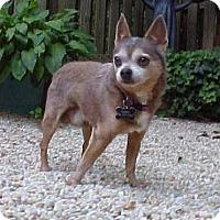 Adopt A Pet :: Bobo - 6 lbs - Dahlgren, VA