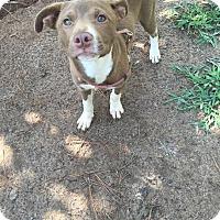Adopt A Pet :: Lilly - Manhasset, NY