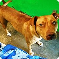 Adopt A Pet :: Tracy - Redding, CA