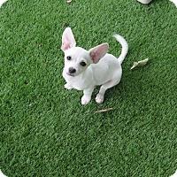 Adopt A Pet :: Marvin - San Antonio, TX